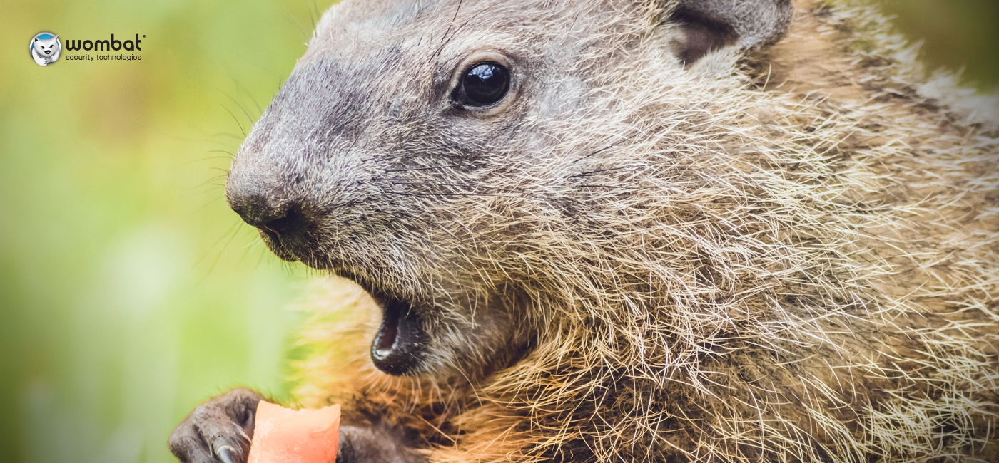 Wombat_Blog_GroundhogDay_Feb2017.jpg